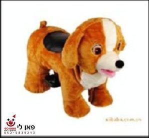 קידי-רייד-כלב-WALKING-ANIMALS להשכרה